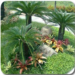 tukang taman tropis